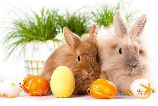 Serdeczne życzenia Wielkanocne